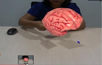 Human Brain in 3D