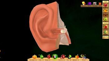 Ear Anatomy 3D