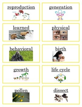 3rd Gr. Science Word Wall Aligned to TEKS - Life Cycles