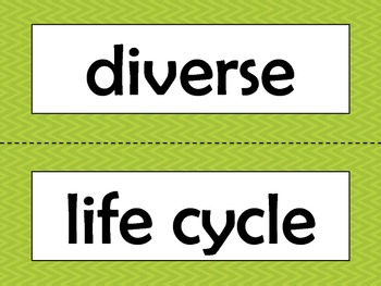 3rd Grade NGSS Science Vocabulary Cards: Life Cycles and Traits
