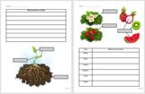 3rd Grade Parts of a Plant