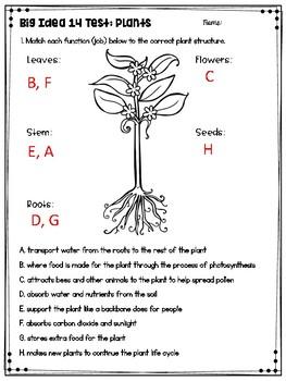 3rd Grade Plants Test: Big Idea 14 by Cori Melton | TpT