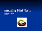 3rd Grade Reading Street Amazing Bird Nests Vocab Power Point