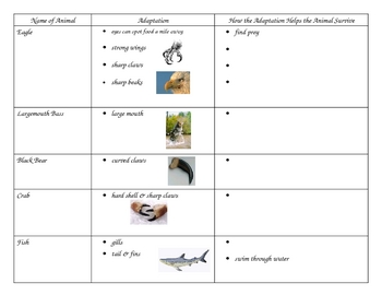 3rd grade science animal adaptation graphic organizer chart tpt. Black Bedroom Furniture Sets. Home Design Ideas