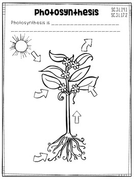 3rd Grade Science Interactive Notebook: Plants
