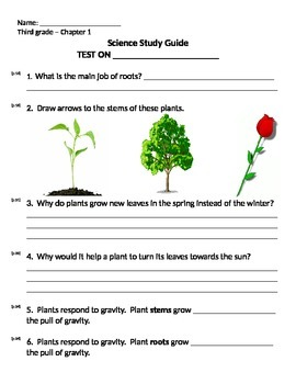 3rd grade NG Life Science - Plants (Ch 1) Study Guide Review word