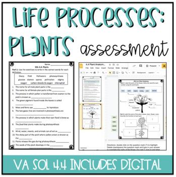 4.4 Plant Anatomy Assessment