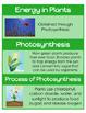 4.4 VA SOL Science Plants Word Wall