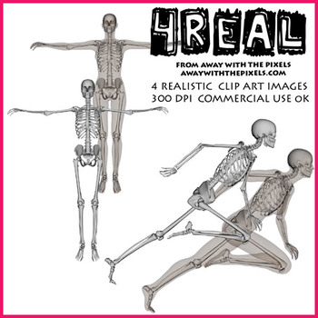 4 Real! 4 Anatomically Correct Female Skeleton Clipart - L
