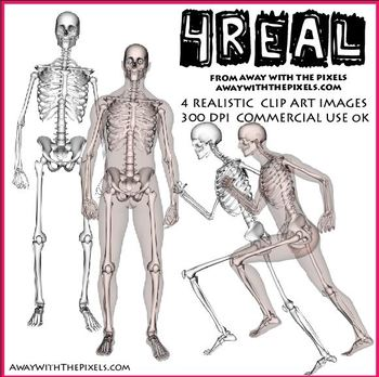 4 Real! 4 Anatomically Correct Male Skeleton Clipart - Large Clip Art Images