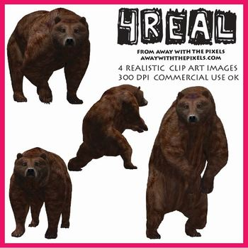 4 Real! 4 Realistic Bear Clip Art Images - Large High Quality Images
