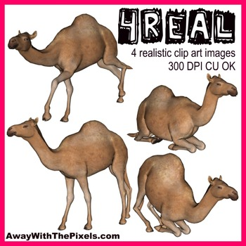 4 Real! 4 Realistic Camel Clip Art Images From Away With The Pixels