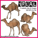 4 Real! 4 Realistic Camel Clip Art Images From Away With T