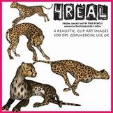 Realistic Animal Clip Art -  4 Realistic Cheetah Clip Art Images