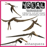 4 Real! 4 Realistic Dinosaur Clip Art Images - Anhanguera