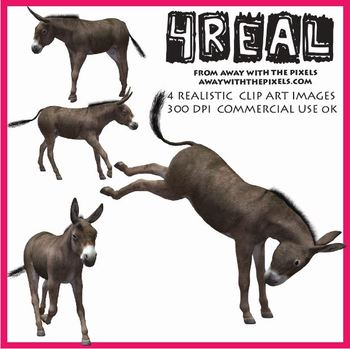 4 Real! 4 Realistic Donkey Clip Art Images from Away With The Pixels