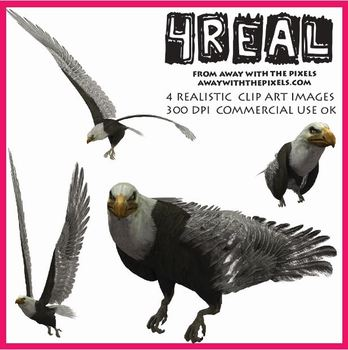 4 Real! 4 Realistic Eagle Clip Art Images from Away With The Pixels