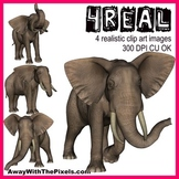 4 Real! 4 Realistic Elephant Clip Art Images - Large High