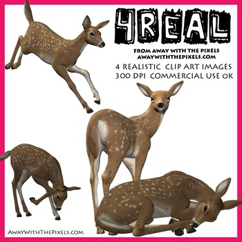 4 Real! 4 Realistic Fawn Clip Art Images - Fawn Clipart