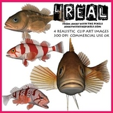 4 Real! 4 Realistic Fish Clip Art Images from Away With Th
