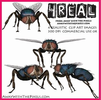 4 Real! 4 Realistic Fly Clip Art Images - Large High Quali