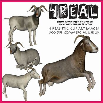4 Real! 4 Realistic Goat Clip Art Images - Large High Qual