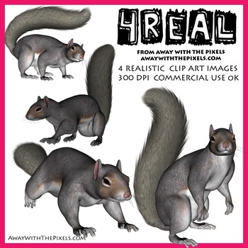 4 Real! 4 Realistic Gray Squirrel Clip Art Images - Squirrel Clipart
