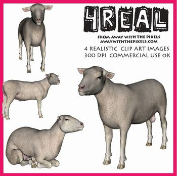 4 Real! 4 Realistic Male Sheep Clip Art Images - Large Hig