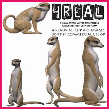 4 Real! 4 Realistic Meerkat Clip Art Images - Large High Quality Images