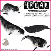 4 Real! 4 Realistic Narwhal Clip Art Images - Narwhal Clipart