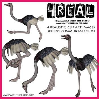 4 Real! 4 Realistic Ostrich Clip Art Images - Geese Clipart