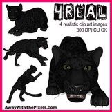 4 Real! 4 Realistic Panther Clip Art Images - from Away Wi