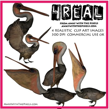 4 Real! 4 Realistic Pelican Clip Art Images from Away With The Pixels