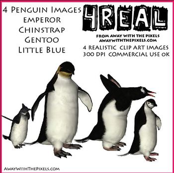 4 Realistic Penguin Clip Art Images, Emperor, Chinstrap, Little Blue and Gentoo