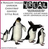 4 Realistic Penguin Clip Art Images, Emperor, Chinstrap, L
