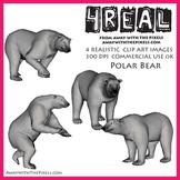 4 Real! 4 Realistic Polar Bear Clip Art Images