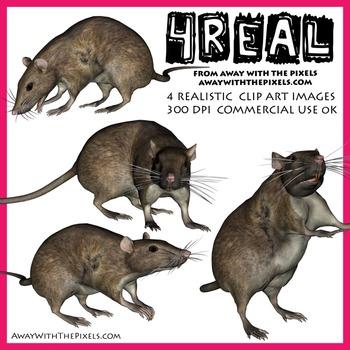 4 Real! 4 Realistic Rat Clip Art Images - Rat Clipart