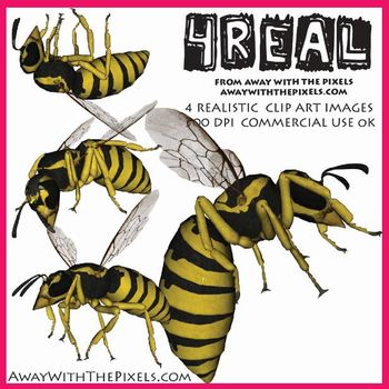 4 Real! 4 Realistic Wasp Clip Art Images - Large High Quality Images