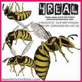 4 Real! 4 Realistic Wasp Clip Art Images - Large High Qual