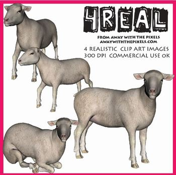 4 Real! 4 Realistic Sheep Clip Art Images - Large High Quality Images