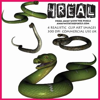 4 Real! 4 Realistic Snake Clip Art Images - Large High Qua