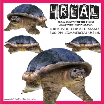 4 Real! 4 Realistic Snapping Turtle Clip Art Images - Snapping Turtle Clipart