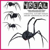 4 Real! 4 Realistic Spider Clip Art Images - Large High Quality Images