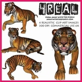 4 Real! 4 Realistic Tiger Clip Art Images from Away With The Pixels