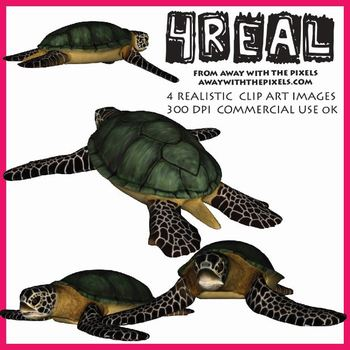 4 Real! 4 Realistic Turtle Clip Art Images from Away With The Pixels