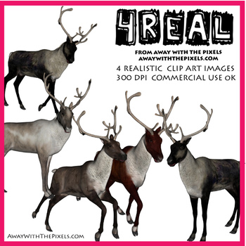 4 Real! 5 Realistic Reindeer or Caribou Clip Art Images