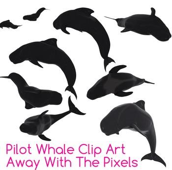 4 Real! 9 Realistic Pilot Whale Clip Art Images - Pilot Wh
