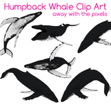 4 Real! Realistic Humpback Whale Clip Art - Atlantic, Pacific Humpback Whale