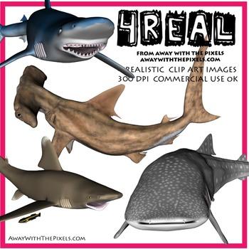 4 Real! Realistic Shark Clip Art - Hammerhead, Blue, Whale & White Tipped