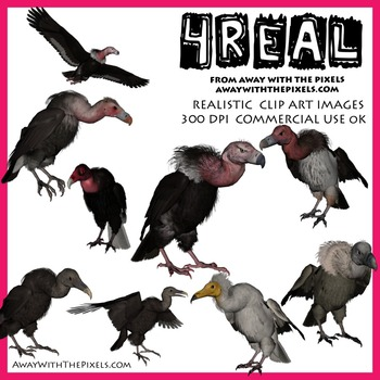 4 Real! Realistic Vulture Clip Art - 7 Breeds /10 Images